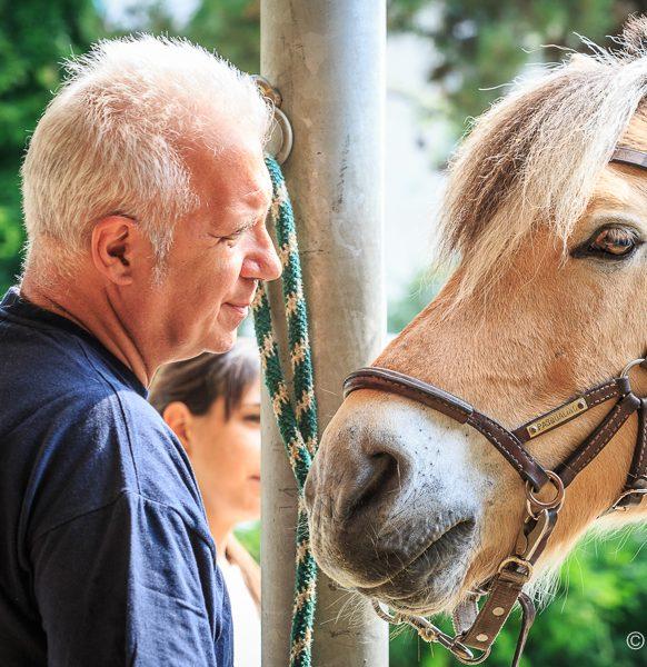 Riab_Equestre-102
